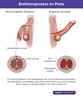 arteriosklerose penis